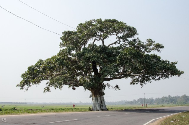 And along the path we came upon a tree, big, imposing and calling us to its shade. And we obliged.
